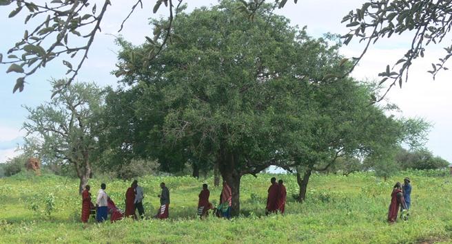 Village meeting under a tree